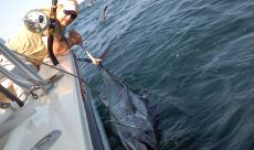 Deep Sea Fishing Central New Hampshire Guides